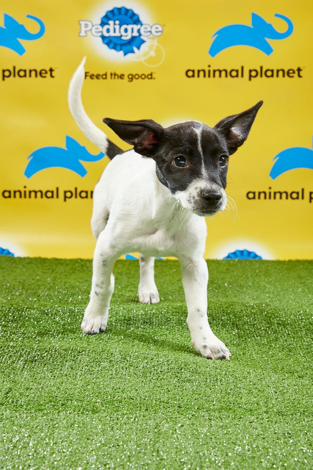 The Puppies From The 2019 Puppy Bowl Are The Real Stars Of Super