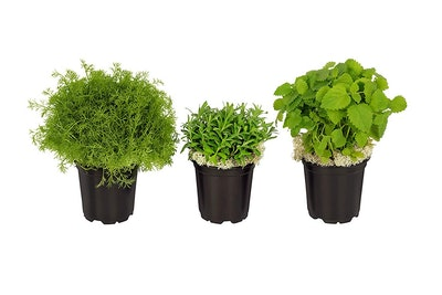 The Three Company Stress-Relieving Aromatic Herbs