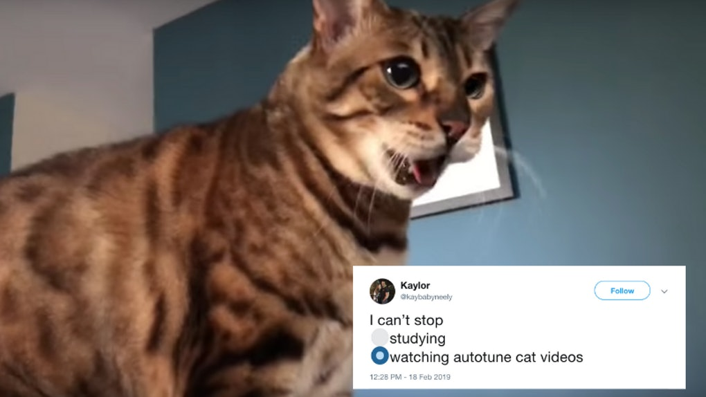 These Tweets Remixing The Autotune Cat Meme Will Make You LOL