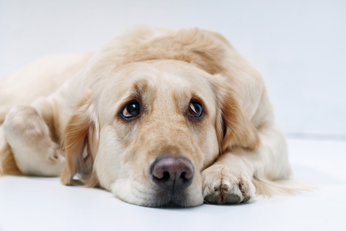 Your Dog Could Be Experiencing Mood Swings, According To Fascinating New Research