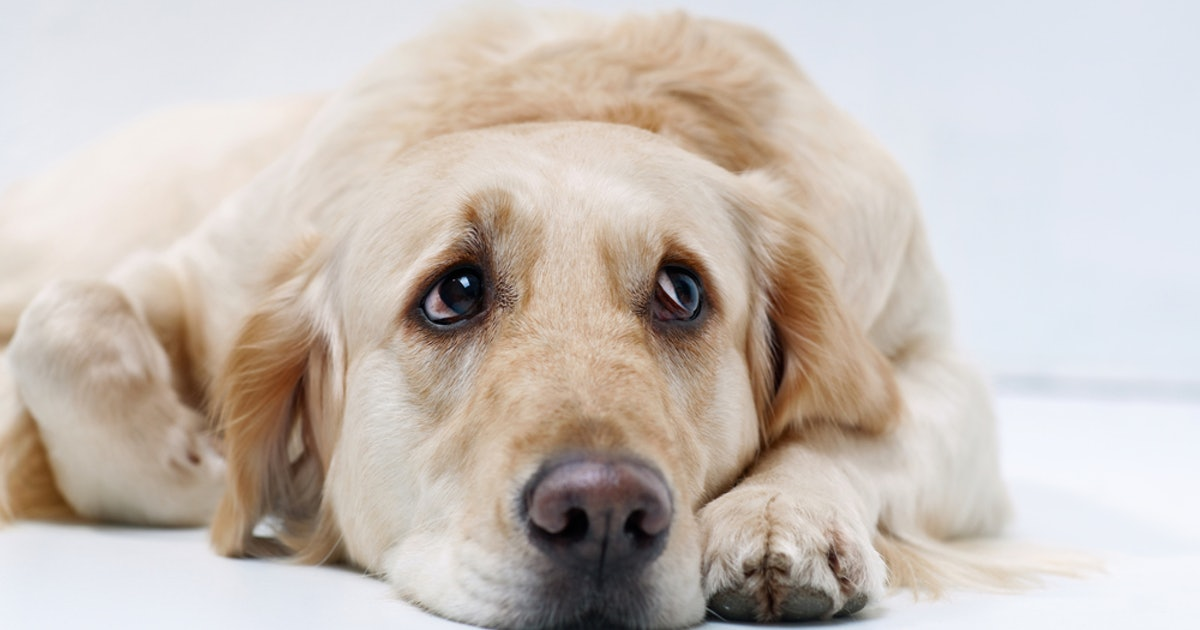 Your Dog Could Be Experiencing Mood Swings According To