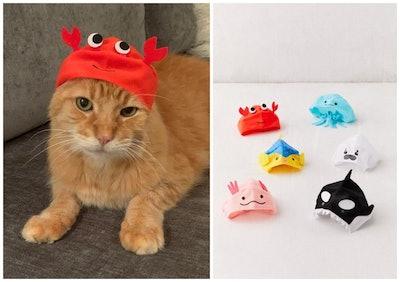 Aquarium Cat Cap