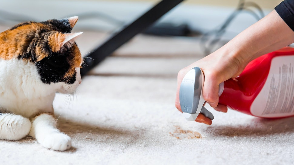 The 3 Best Carpet Cleaning Solutions