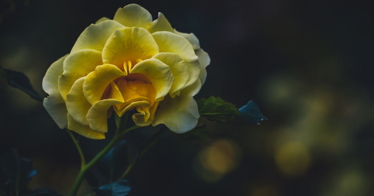 16 Non-Religious Funeral Readings From Poems