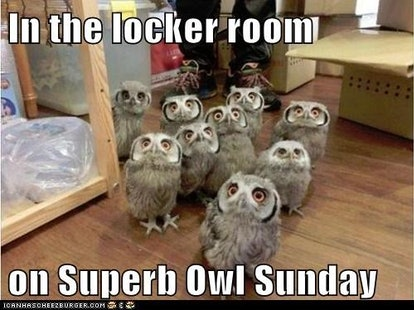 Funny Superb Owl Memes To Post Regardless Of Which Team You Re Rooting For