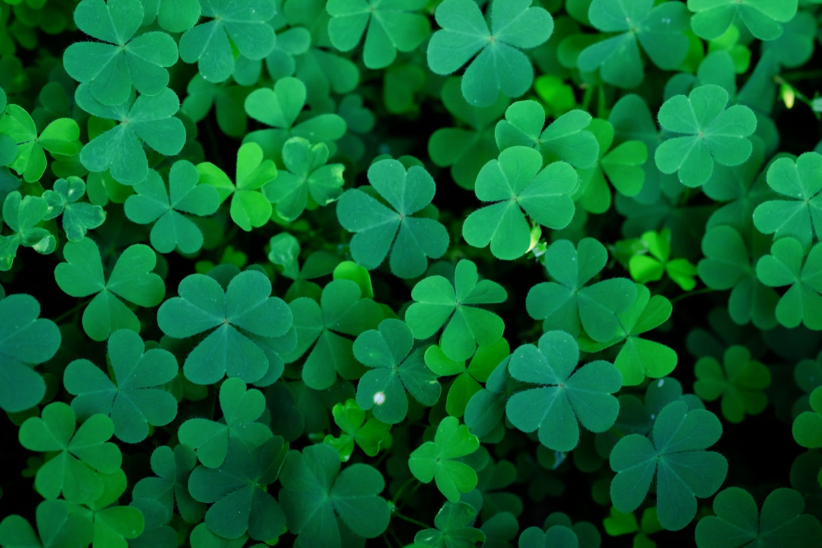 7 St. Patrick's Day 2019 Poems To Help You Honor The Holiday With