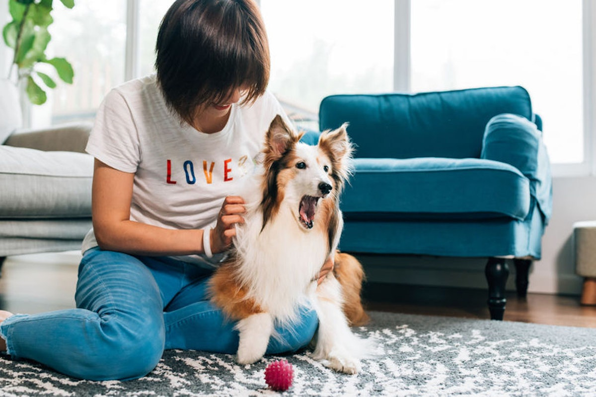 How To Show Your Dog Love, Based On Their Love Language