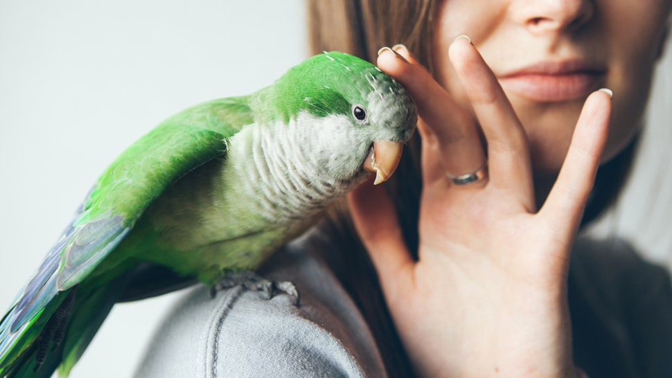 The Best Pet For You, Based On Your Zodiac Sign