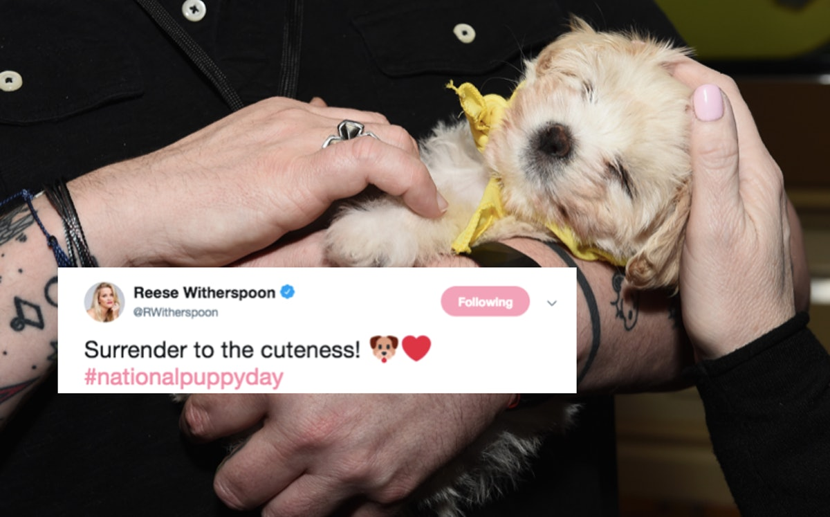 These Tweets About National Puppy Day 2019 Include The Cutest Photos & Videos Ever