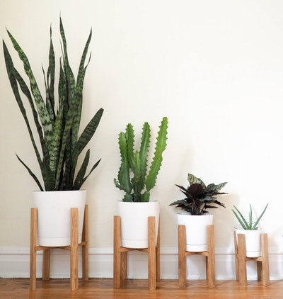 Wooden Plant Stands & White Pots