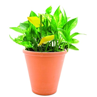 Safer Houseplant Sticky Stakes (14 Pack)