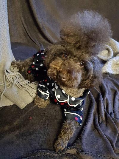 Doggy Pyjamas