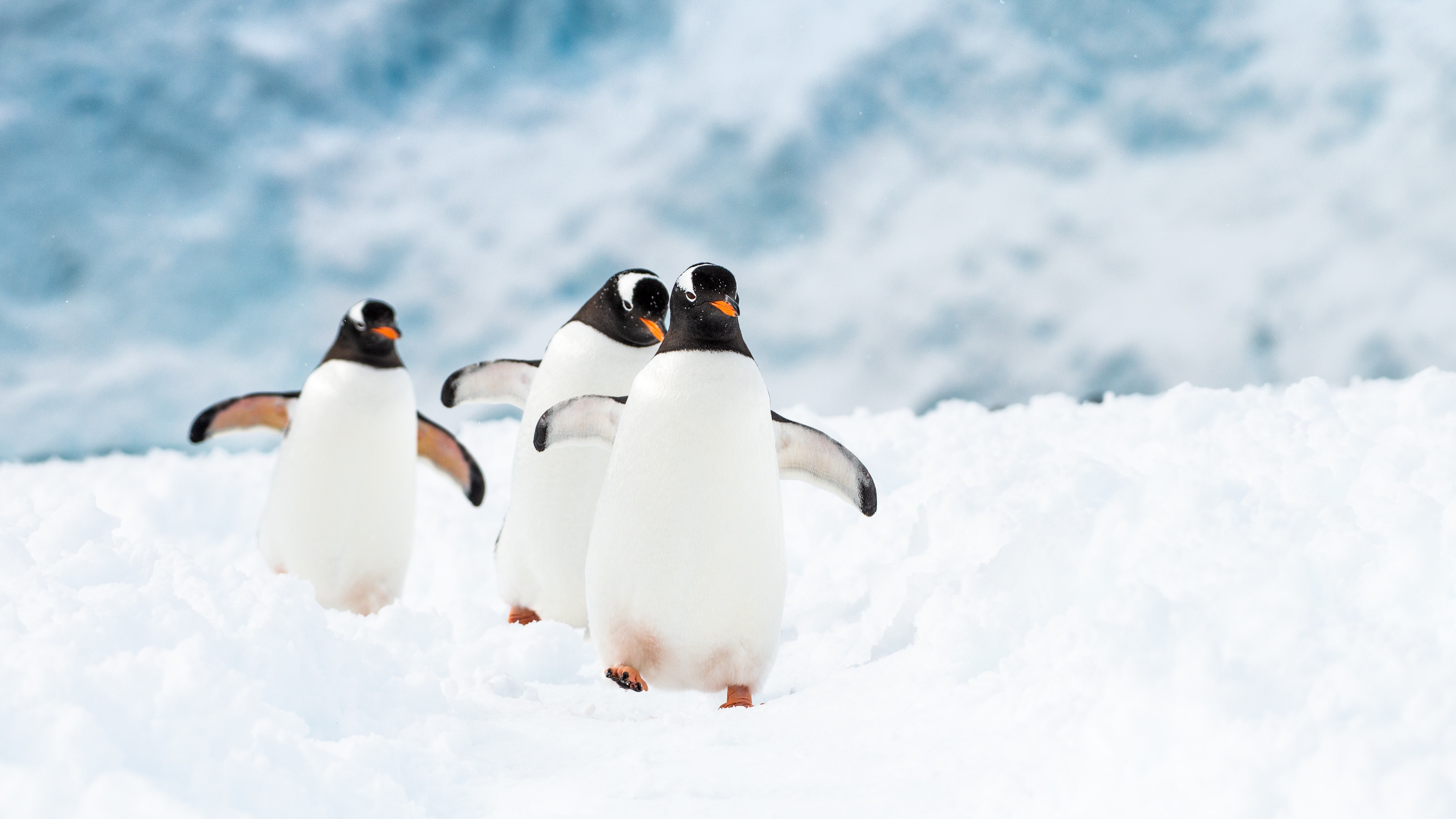12 Things No One Tells You About Traveling To Antarctica