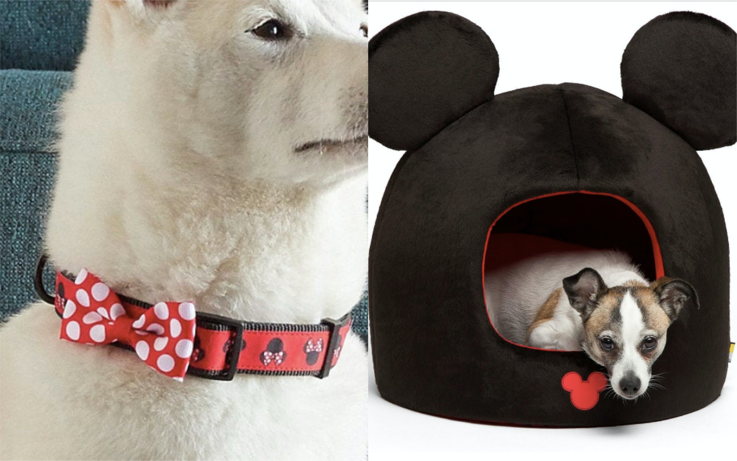 Disney's Online Store Carries Pet Gear — Here Are 15