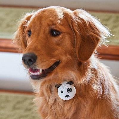 G.O.A.T. Bluetooth Pet Speaker