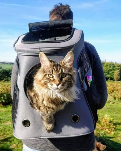 Your Cat Backpack Fat Cat Backpack