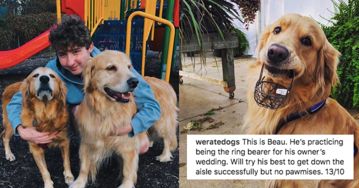 WeRateDogs' Matt Nelson Is Responsible For The Captions On Your Favorite Dog Photos