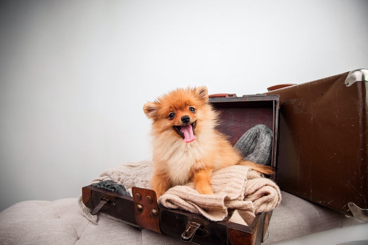 How To Travel With Your Dog, Depending On How Big Your Pup Is
