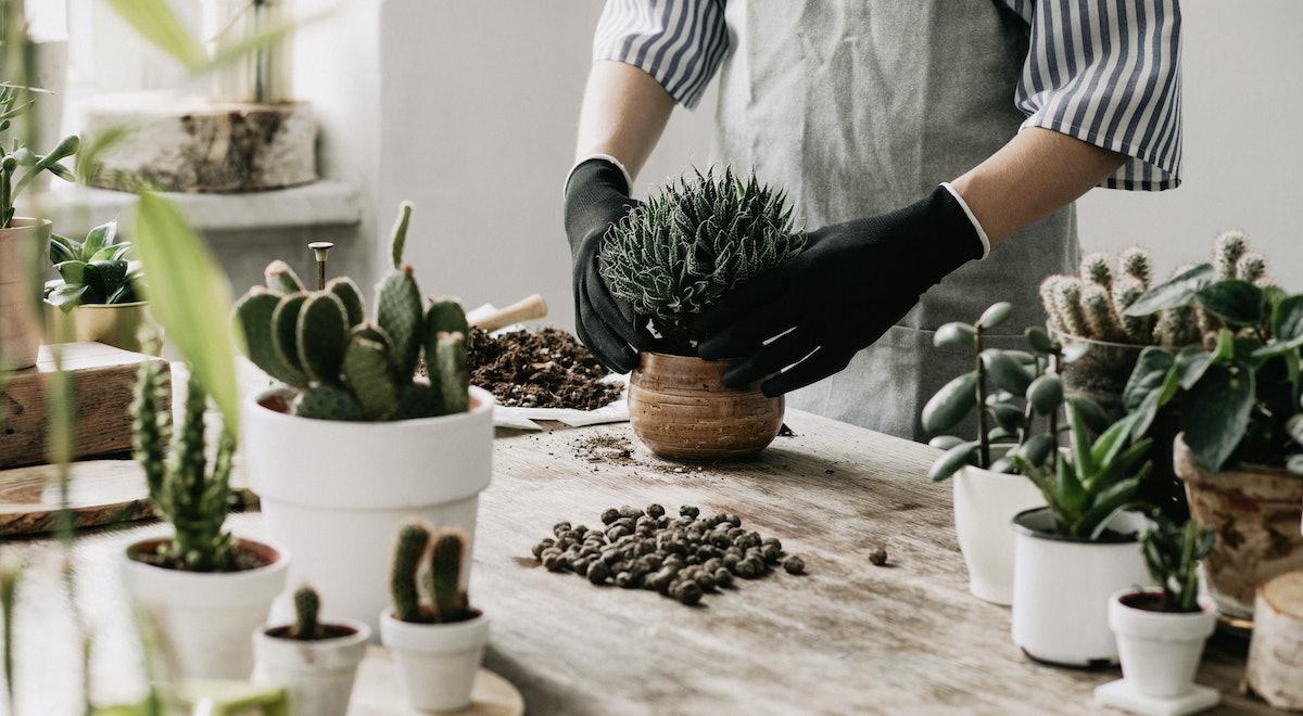 The 10 Best Pots For Indoor Plants