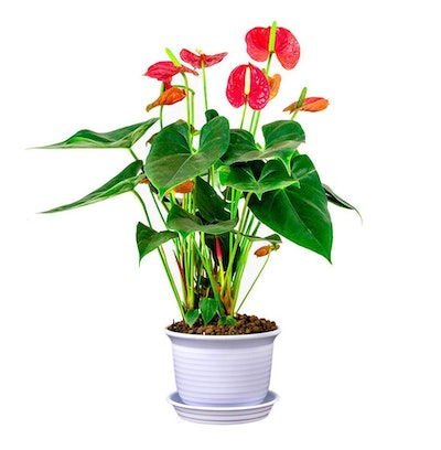DeElf Plastic Plant Pots With Trays, 6 Inches (10-Pack)