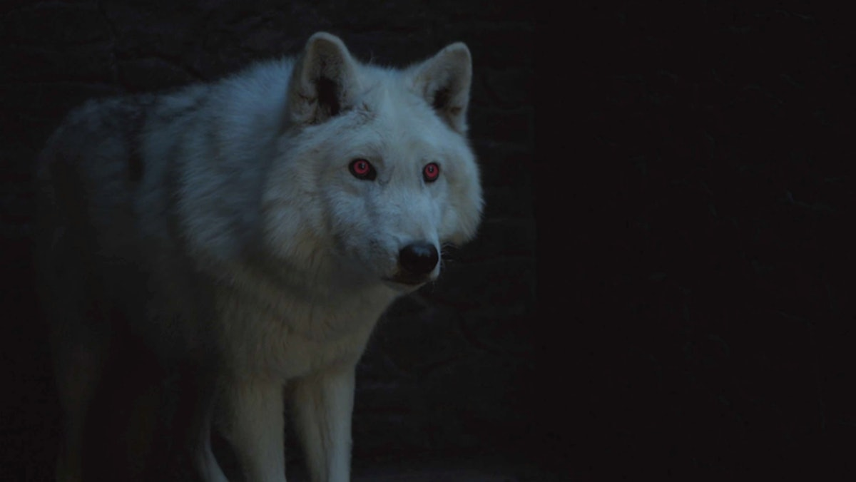 Is Ghost In 'Game Of Thrones' Season 8? Jon Snow's Direwolf Has Remained A Loyal Companion