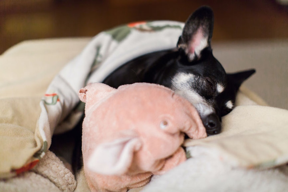 6 Things Your Dog Is Trying To Tell You When They Cuddle Up To You In That Super-Cute & Snuggly Way