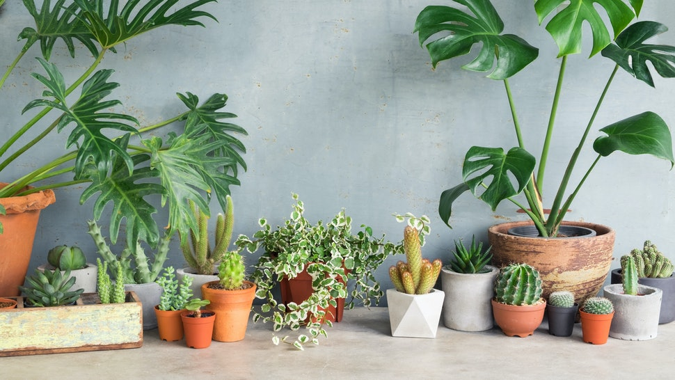 7 Hard-To-Kill Plants For People Who Can't Keep A Green Thing Alive