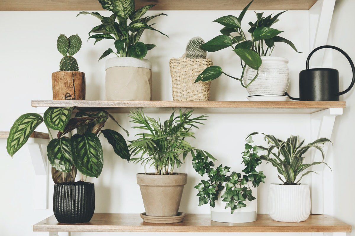 The Benefits Of Indoor Plants Can Be Both Physical & Mental, Says Science