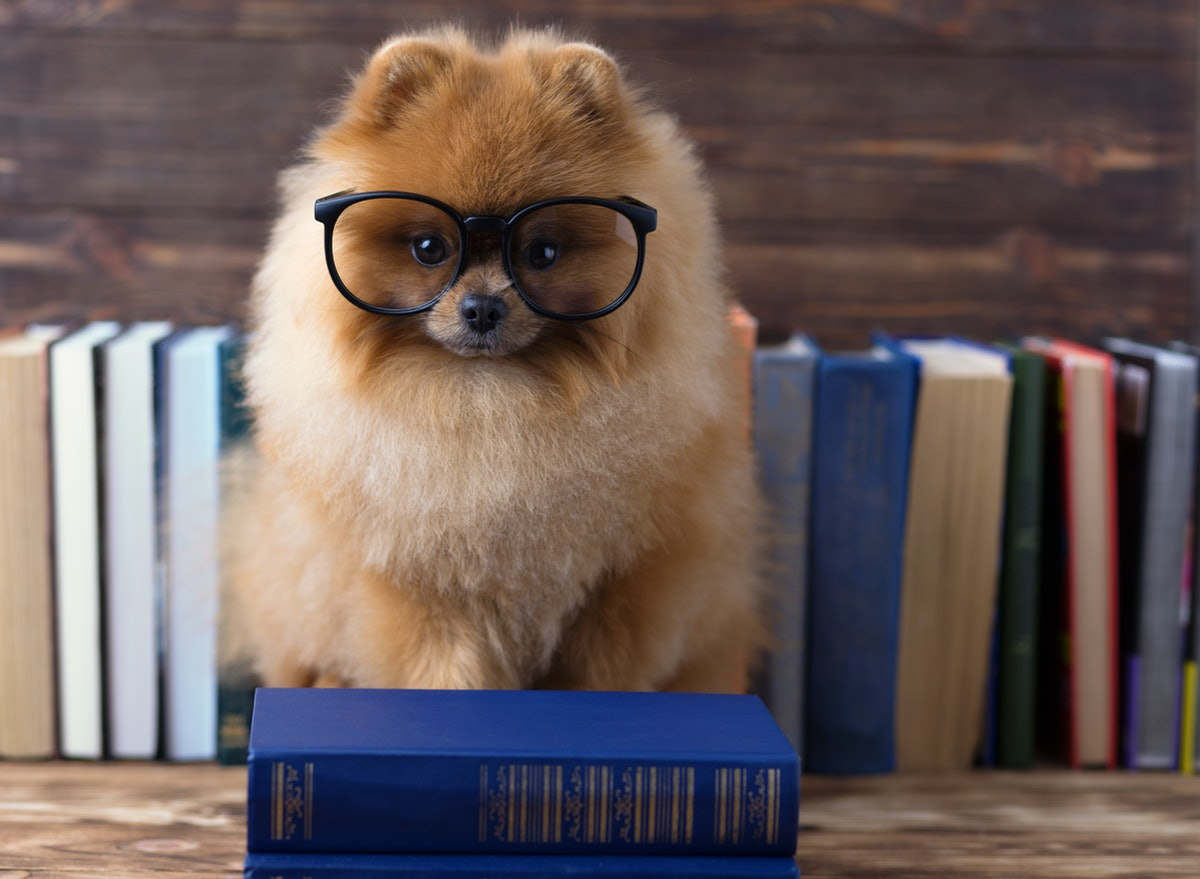 The 11 Smartest Dog Breeds To Adopt
