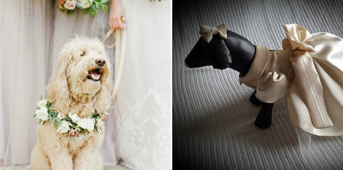 This Dog Bridesmaid Dress Is Exactly What Your Pup Needs For Your Wedding Day