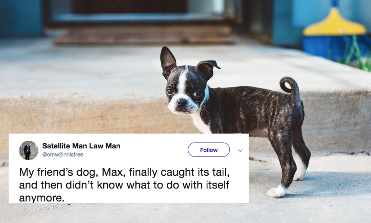 This Video Of A Dog Finally Catching His Tail Has Twitter Laughing So Hard