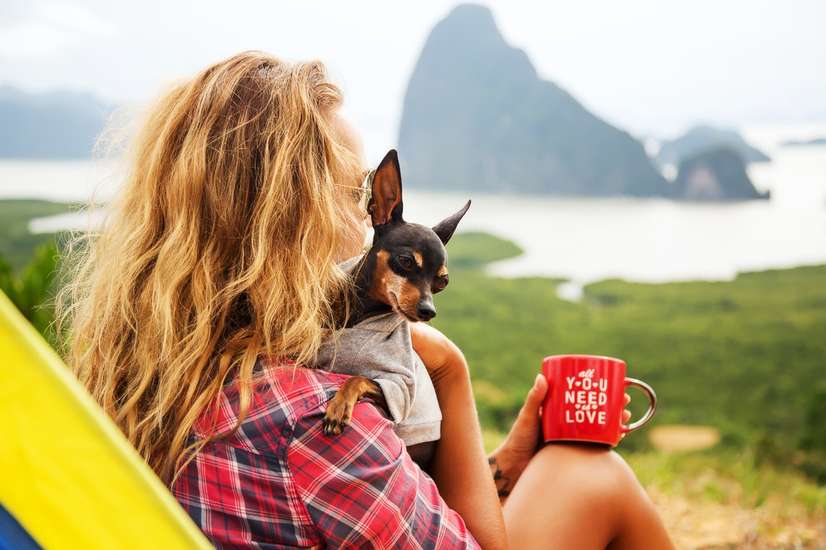 10 Best Dog Breeds For If You Travel A Lot With Your Pup