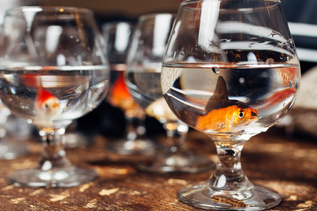 This Reddit Thread About A Maid Of Honor Picking Up Goldfish From Wedding Centerpieces Is Unreal