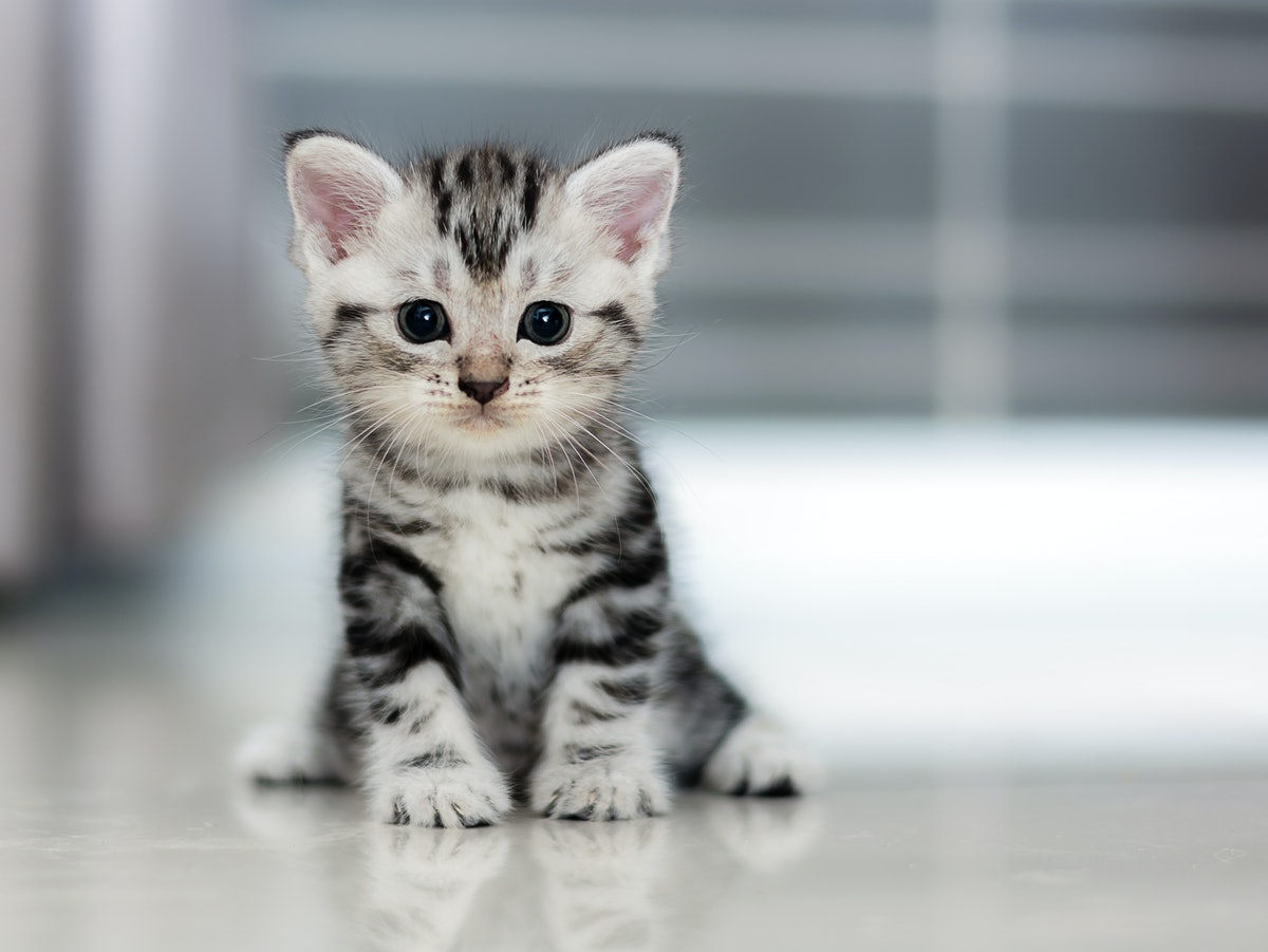 8 Best Cat Breeds For First-Time Owners