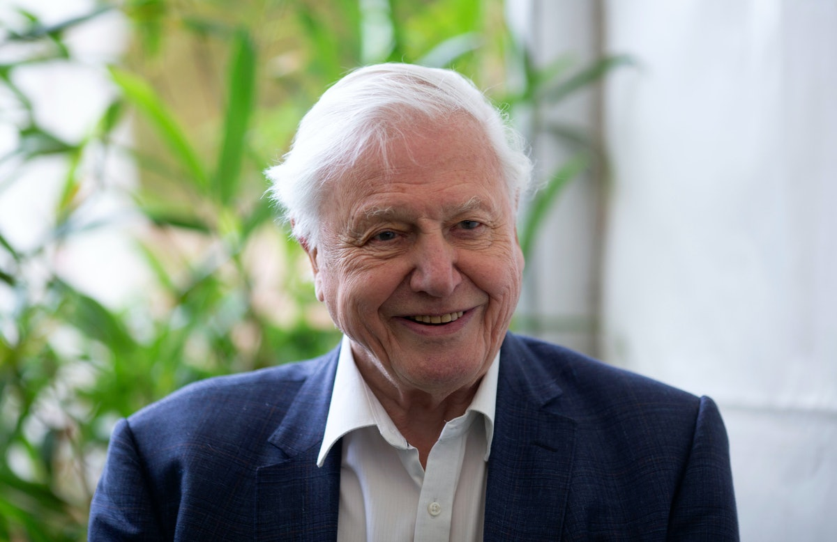 The Best David Attenborough TV Moments, Because The Nation's Granddad Has Had A Legendary Career