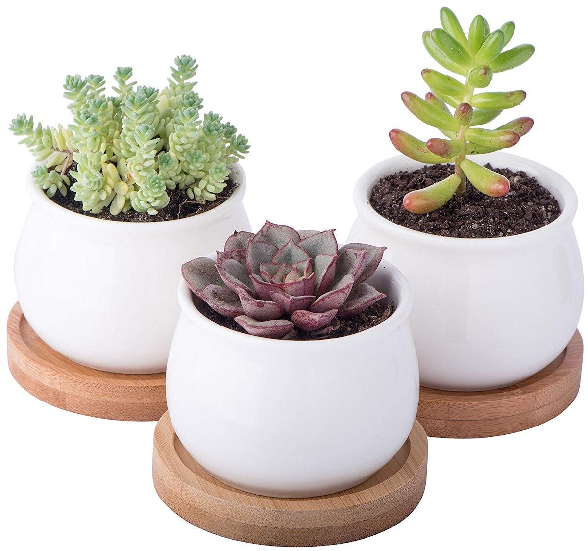 StarPack Premium Succulent Planter Pot Set (Set of 3)