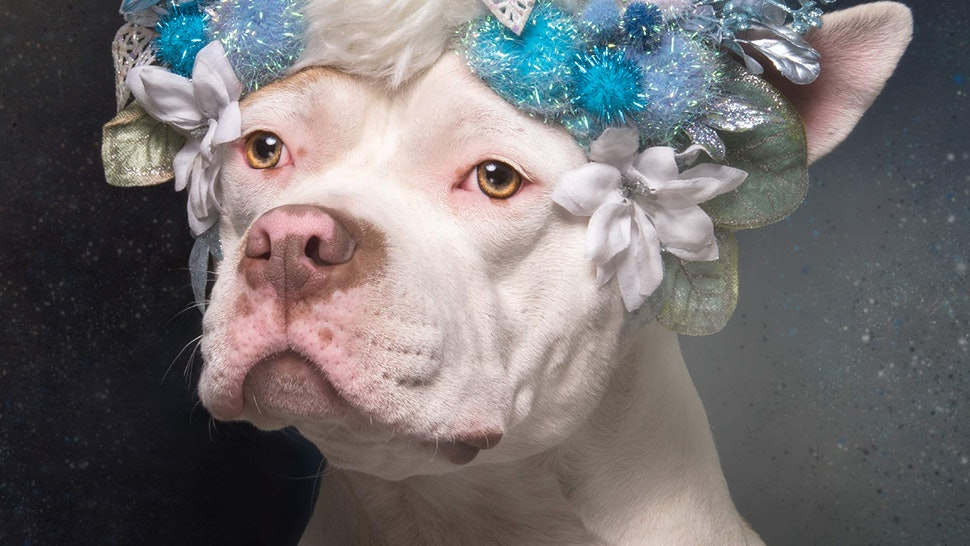 15 Coffee Table Books For Pet Who Can T Get Enough Of Cute Pitbulls Or Bodega Cats