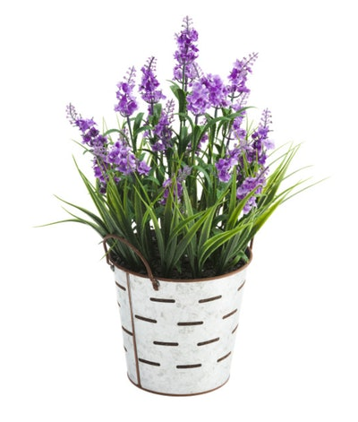 17 inch Lavender in Olive Bucket