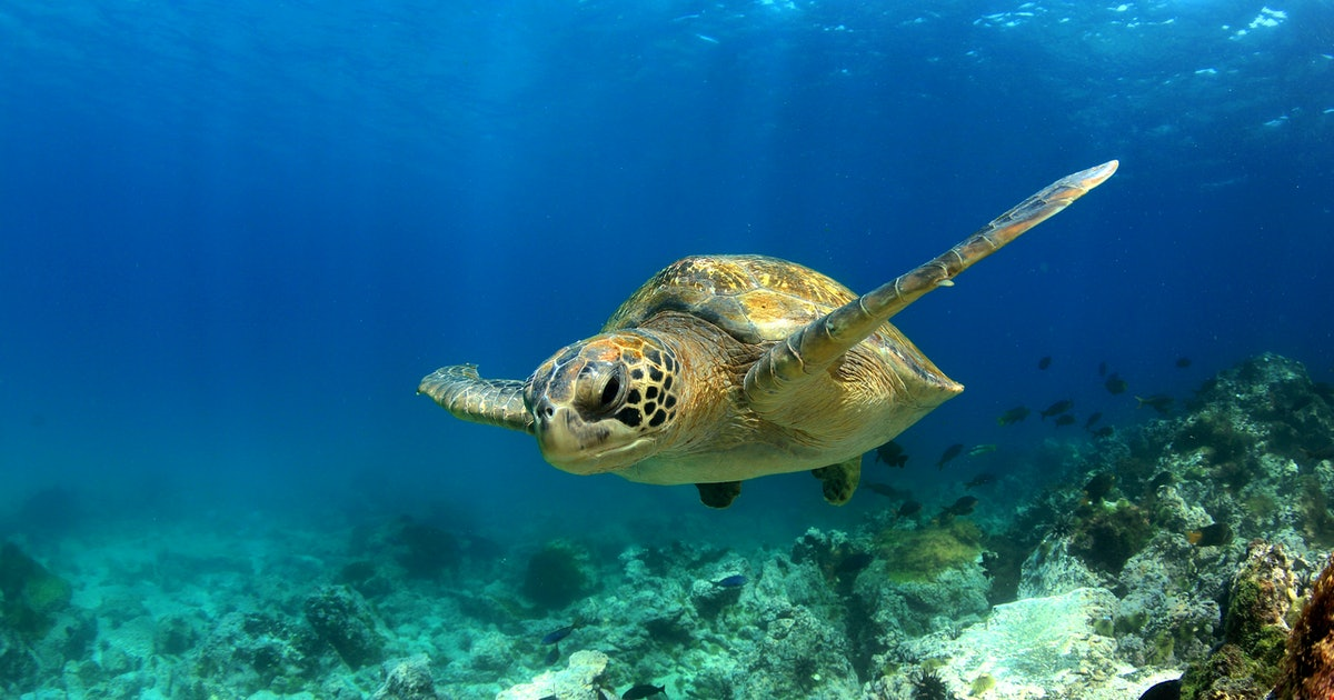 Wander Or Bust: The Galapagos On $2,688