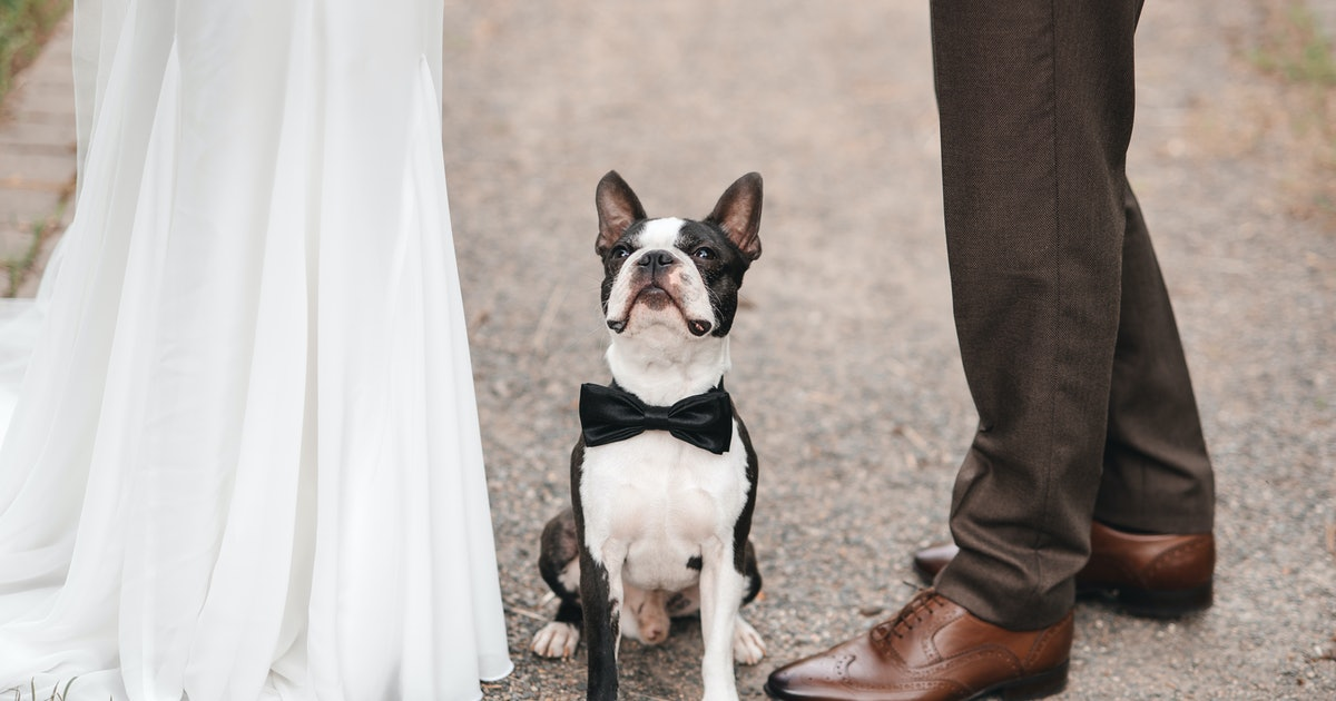 How To Train Your Dog To Walk Down The Aisle At Your Wedding, According To Pet Trainers