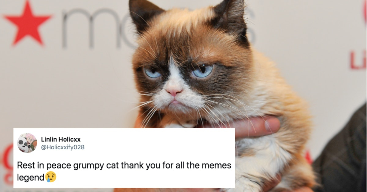 Here Are The 14 Best Grumpy Cat Memes To Honor The Most