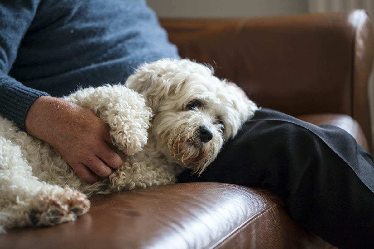 9 Dog Breeds To Adopt If You Want A Lap Dog
