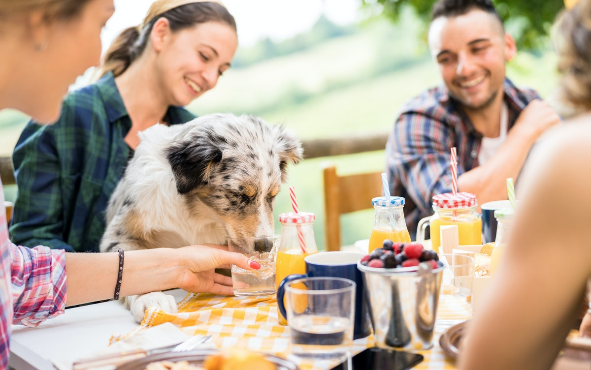 7 Ideas for Dog Lovers To Survive If You Live In A Dog-Less House