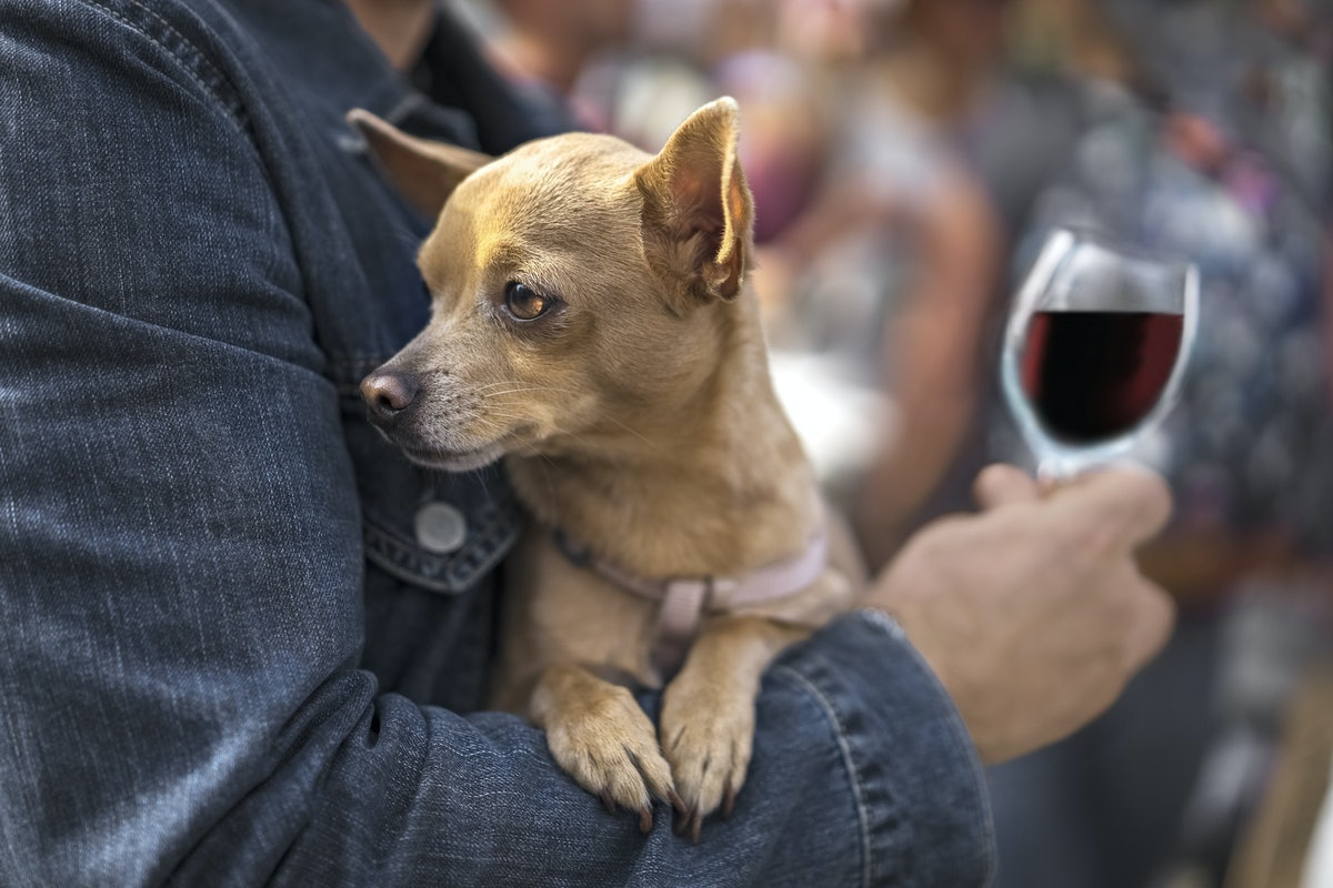 K9 Cinemas Lets You Bring Your Dog To The Movies & Gives You Unlimited Wine