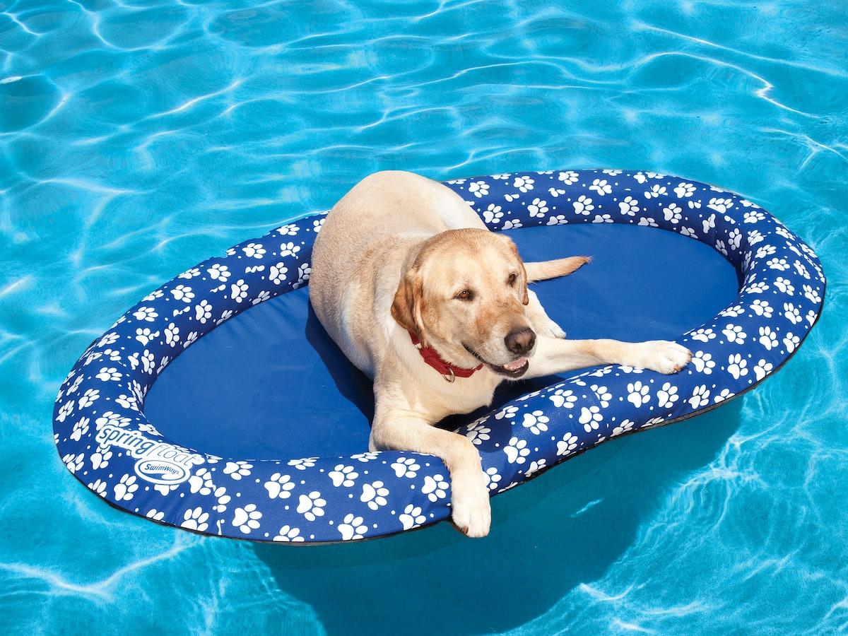 SwimWays Spring Float Paddle Paws Dog Pool Float, Large