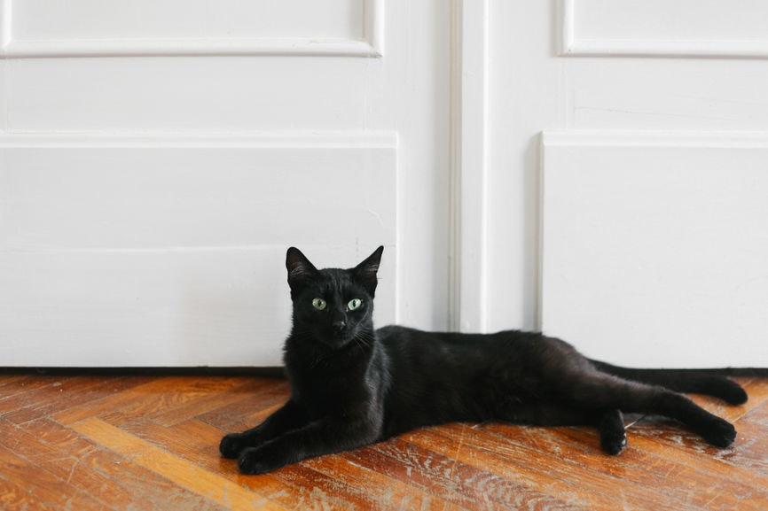 Nice Why Are Black Cats A Halloween Symbol? Hereu0027s The History ...