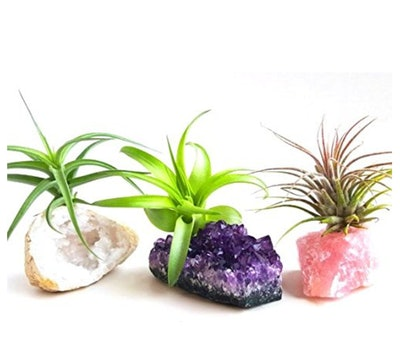 Aura Creations Air Plant Kit