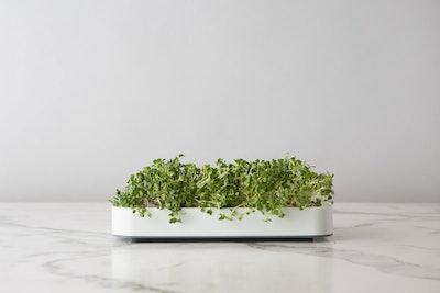 Chef'n 102-741-389 Microgreens Micro Greens Grower