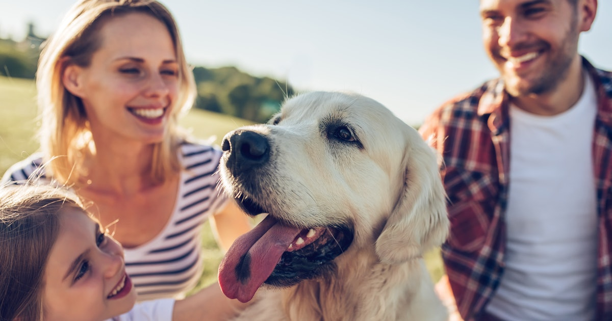 The 11 Best Dog Breeds Around People If You Like To Have A Lot Of Company