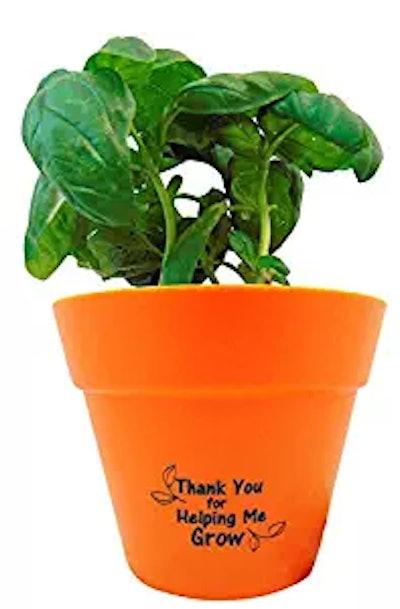 Teacher Indoor Basil Plant Pot Set